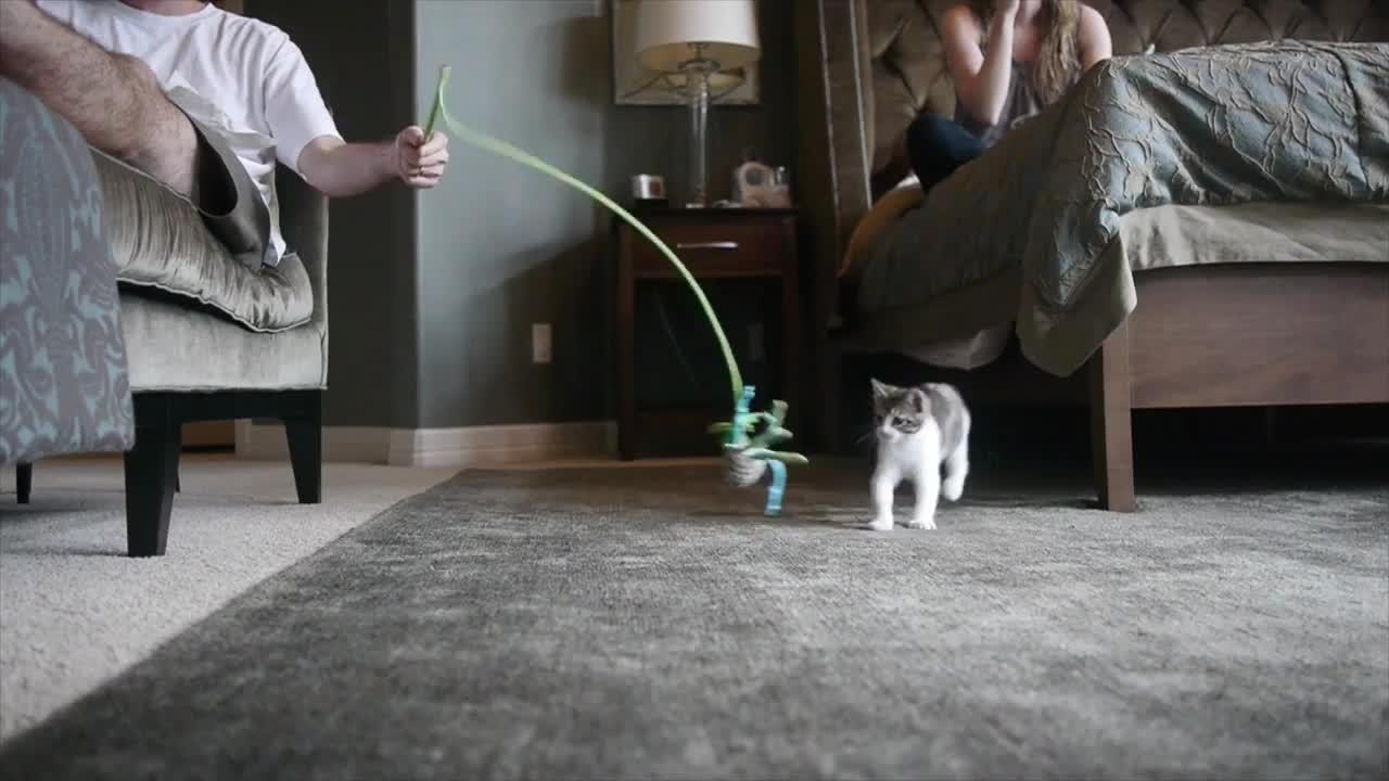 Katze frisst nicht: Was muss ich tun?