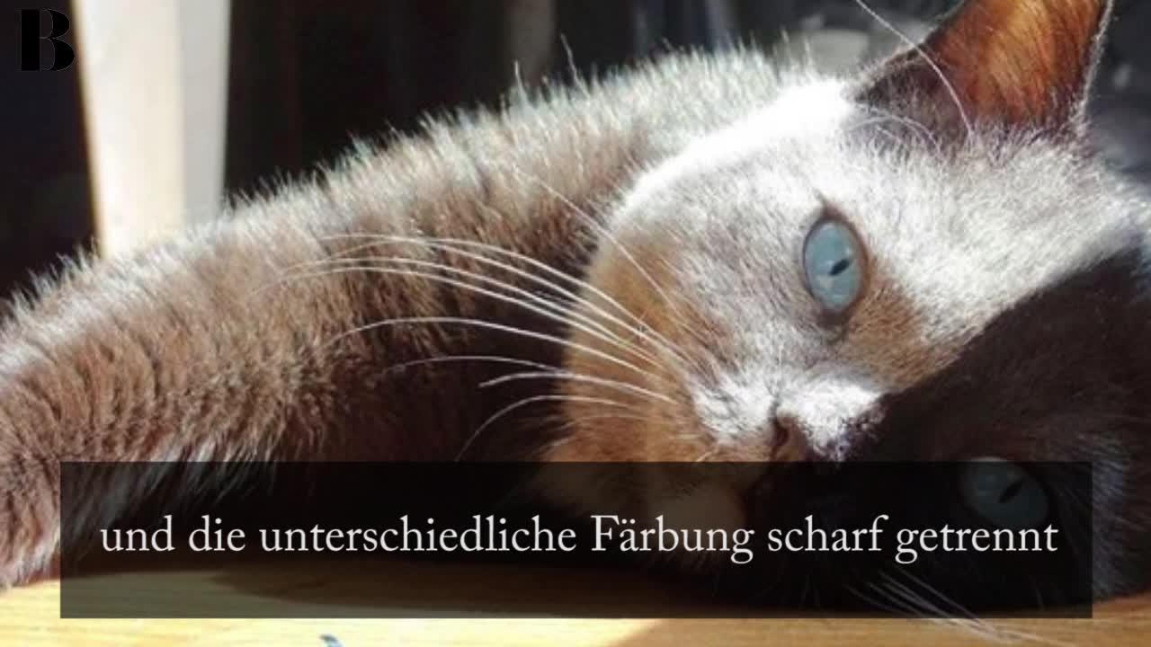 Die schönste Katze der Welt? Schaut mal, wie dieses Katzenbaby heute aussieht!
