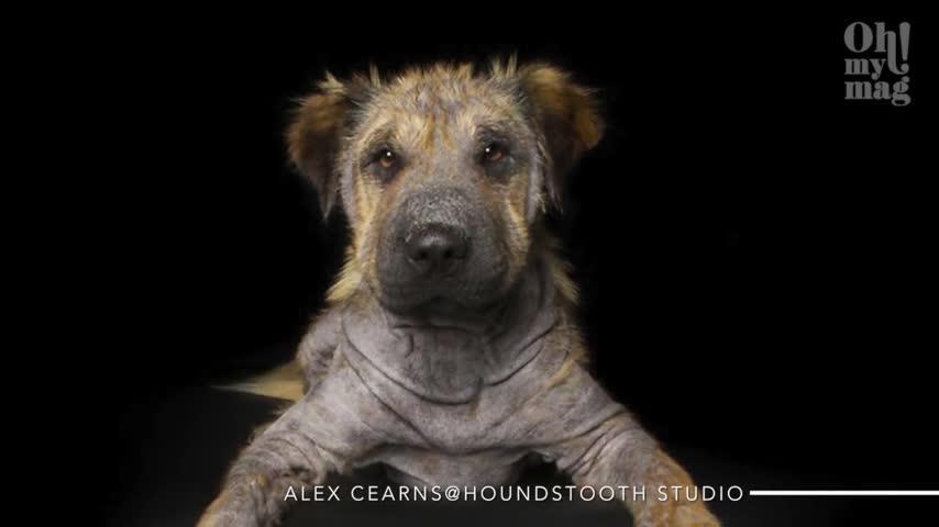 Behinderte Hunde sind liebenswert – das zeigt diese engagierte Fotografin