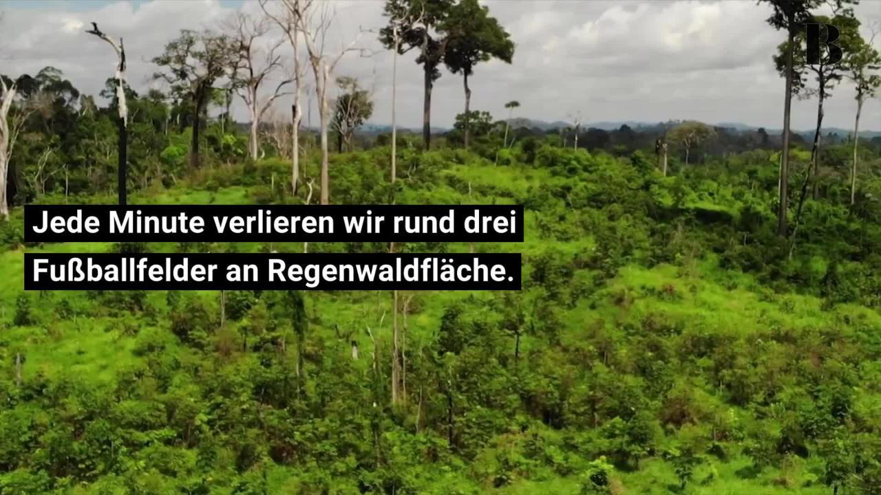 Der Regenwald brennt: Warum jetzt der Moment ist, aktiv zu werden