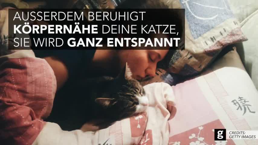 Darum schleicht sich deine Katze nachts in dein Bett