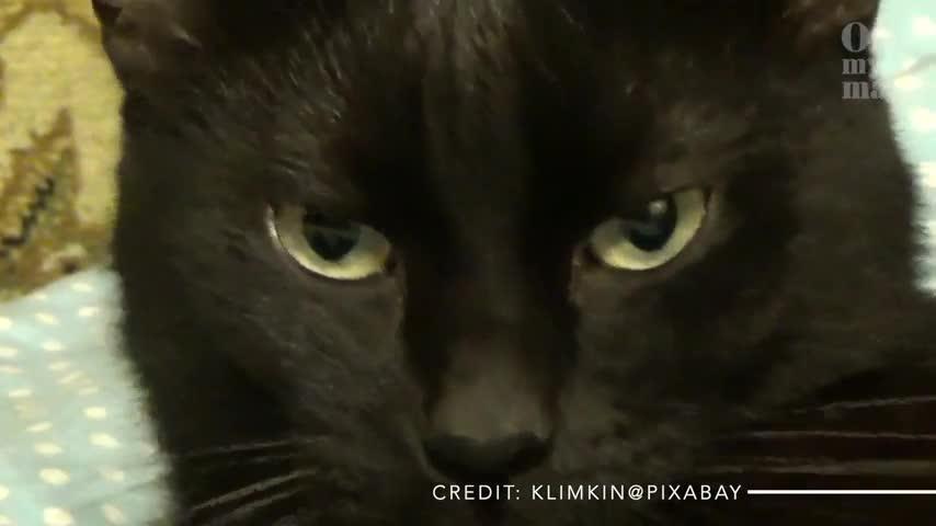 Warum haben Katzen senkrechte Pupillen?
