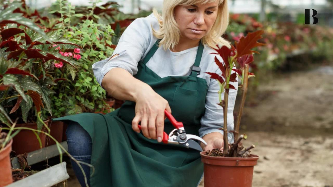 Begonien überwintern: So kommen die Pflanzen durch den Winter